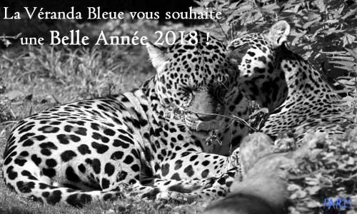 VOEUX PARIS LA VERANDA BLEUE 2018
