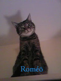 romeo-star-o-text-copie