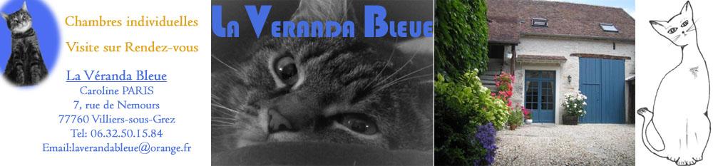 La Véranda Bleue, pension pour chat en seine et marne 77